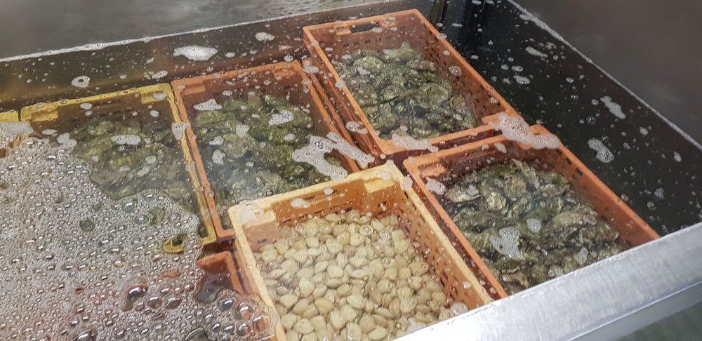 Image: Kelly's Oysters