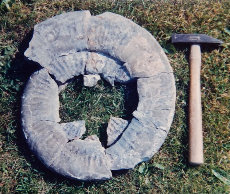 Image: This is the ammonite that broke the spokes of my bicycle wheel; the hammer is 14 inches long (35 cm). My parents said it looked like a loo seat…