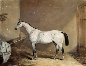 picture, 'Portrait of a horse' (1852)