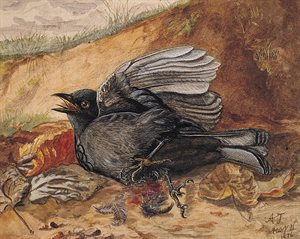 Cock Blackbird in Distress (1876)